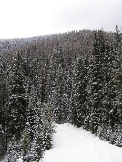 snowfall trees winter