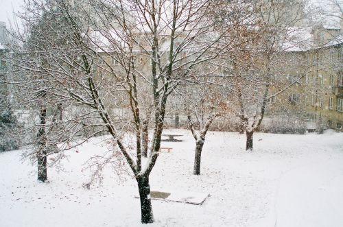 Snowfall - Landscape