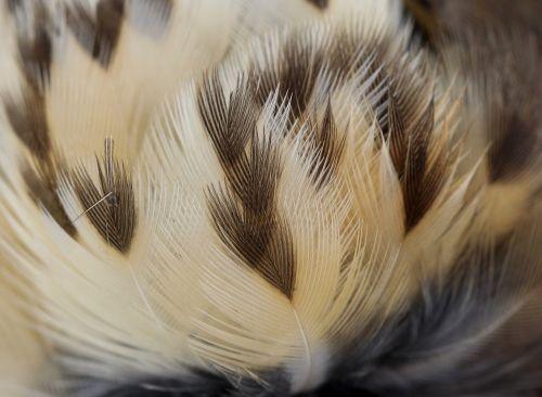 snowflakes feather birds