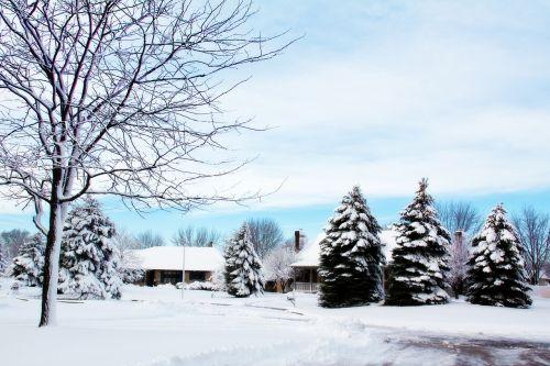 snowy neighborhood snowy trees snow