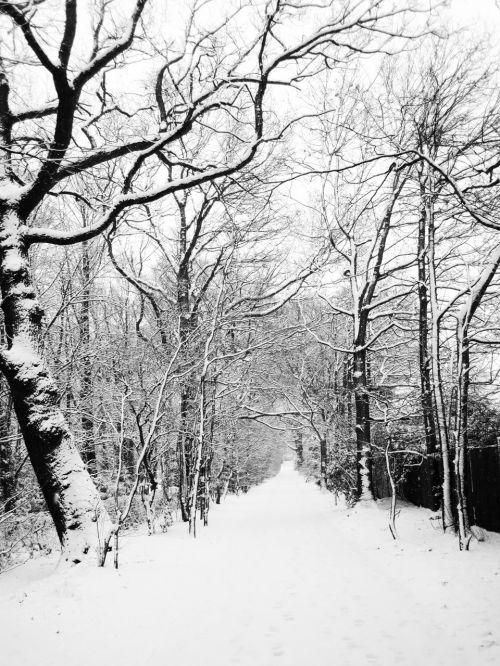 šaltas, Saunus, Šalis, padengtas, ledas, kraštovaizdis, mažai, kelias, kelias, kaimas, scena, mažas, sniegas, snieguotas, trasa, medis, medžiai, kelias, balta, žiema, snieguotas kelias