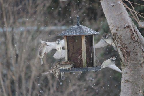 Snowy Sparrow Feeder