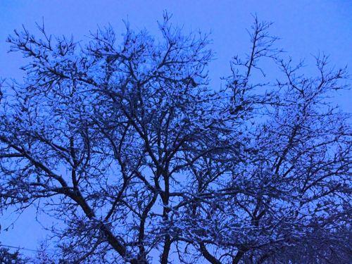 Snowy Tree At Dusk