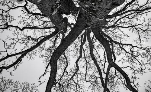 Snowy Tree Branch