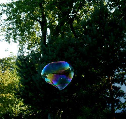 soap bubble large tree