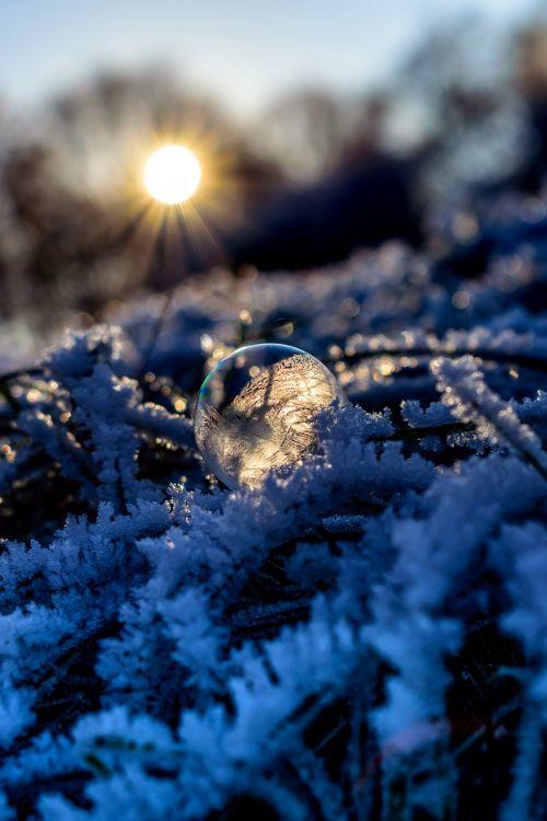 soap bubble seifenblase frozen ice