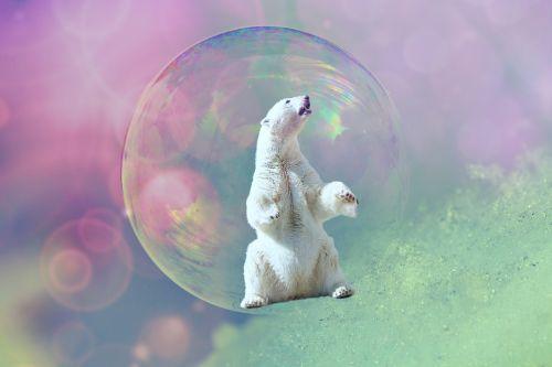 soap bubble polar bear animal