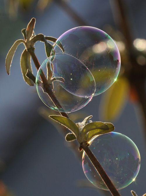 soap bubble light ease