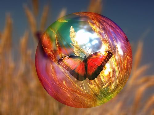 soap bubble butterfly cornfield