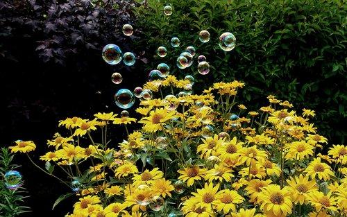 soap bubbles  colorful  flowers