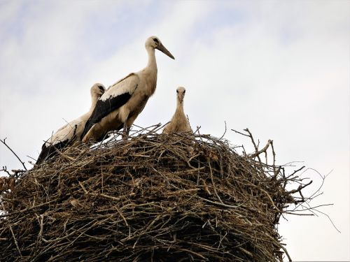 socket storks birds