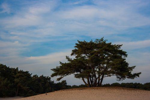soester dunes dunes tree