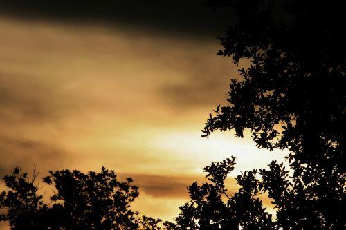 dangus, saulėlydis, švytėjimas, minkštas, medžiai, minkštas švyti saulėlydyje