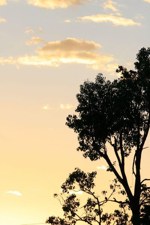 Soft Nuances At Sunset