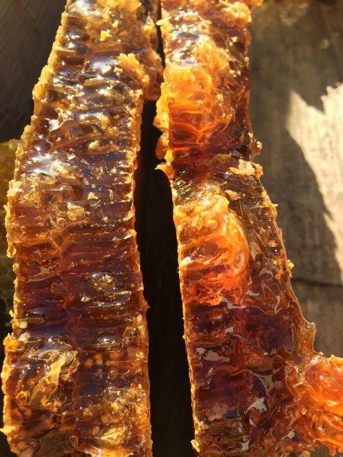 soil honey the original ecology natural