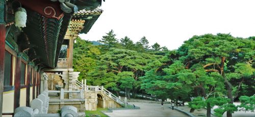 sol wood pine