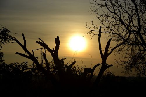 sol twigs sunset