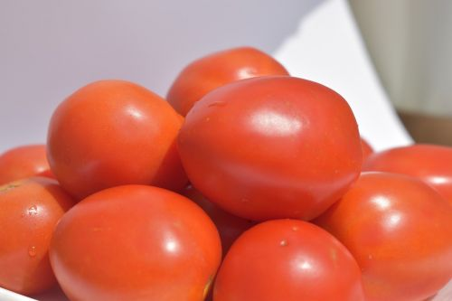 solanum lycopersicum tomatoes red