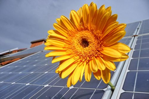 solar photovoltaic renewable