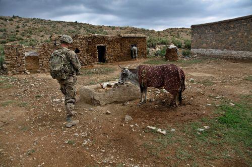 soldier calf farmland