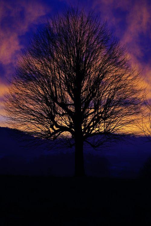 solitary tree sunset sky