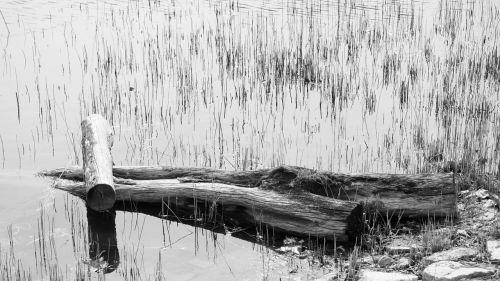 solitude koyo desolation
