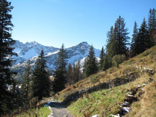 fellhorn snow firs