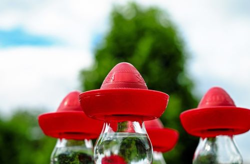sombrero mexican hat red