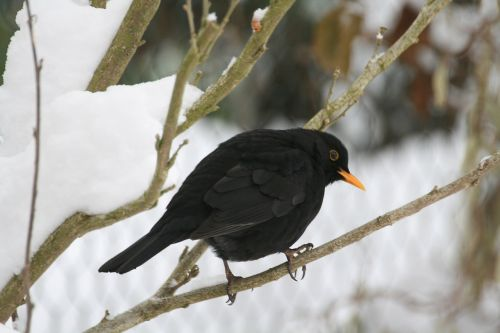 songbird winter food