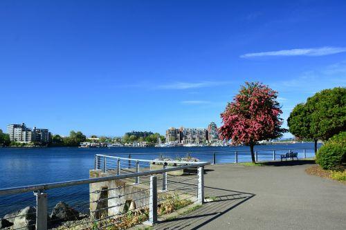 sunshine,takas,Viktorija,bc,vanduo,Kanada,pėsčiųjų,pėsčiųjų takas,kelias,takas,miesto,vaikščioti,Britanija,Kolumbija