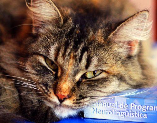 soninha author cat