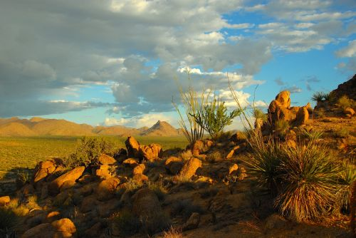 dykuma & nbsp, scena, dykuma & nbsp, kraštovaizdis, sonoran & nbsp, dykuma, Arizona, žygiai, kalnai, dykumoje & nbsp, takas, kaktusas, dykuma & nbsp, flora, saulėlydis, Sonoran dykuma