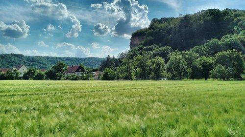 sörnewitz  boselfelsen  cornfield