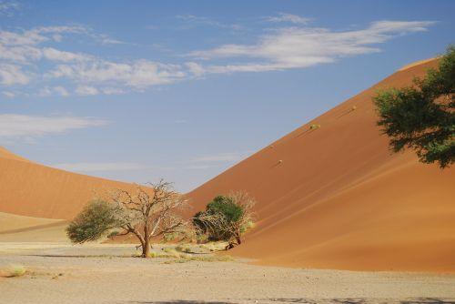 Sossusflei,Namibija,dykuma,smėlis,afrika,kopos,Sossusvlei,gamta,sausas,rotorinis smėlis,mirę medžiai,dangus,raudona,mėlynas