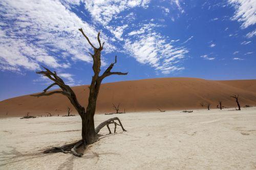 Sossusvlei,deadvlei,dykuma,afrika,Namibija,smėlis,kopos,medžiai,gamta,parkas,kelionė,kraštovaizdis,namib,sausas,lauke,dangus,vaizdingas,sausas,laukiniai,medis,vienišas,safari,peizažas,laukinė gamta,aplinka,natūralus,desolate,karštas,pan,vlei,slėnis