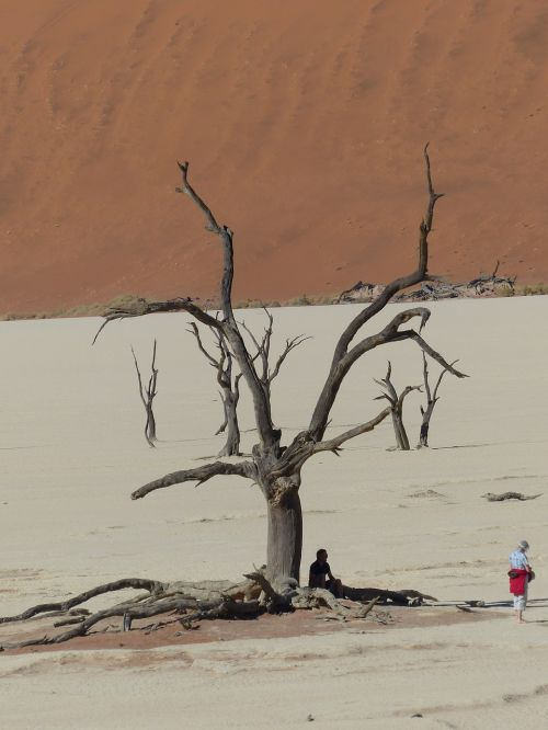 soussousvlie,mirę medžiai,Namibija,afrika,dykuma