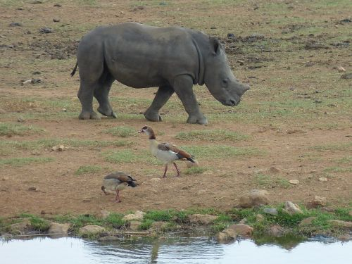 south africa steppe savannah