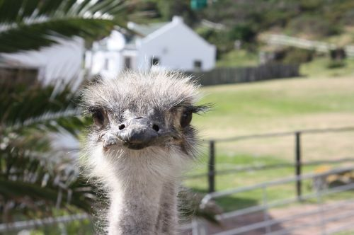 south africa ostrich farm bouquet