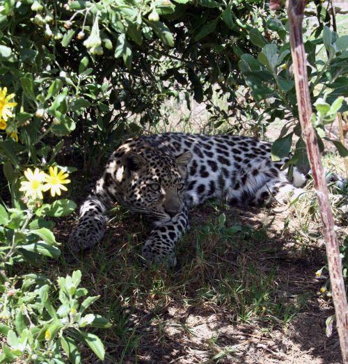 south africa garden route tenikwa wild life centre