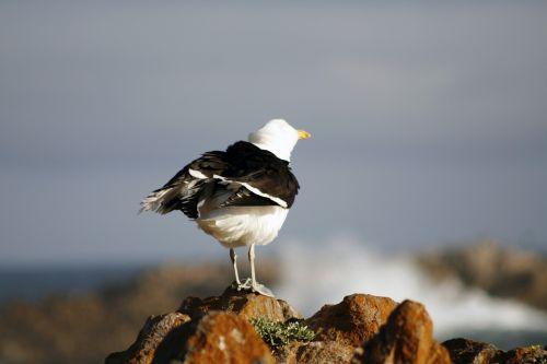 south africa kynsna heads seascape