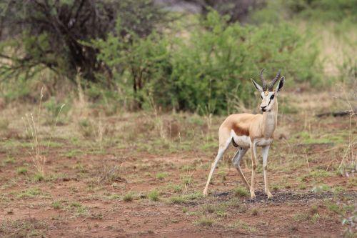 south africa pilanesberg national park