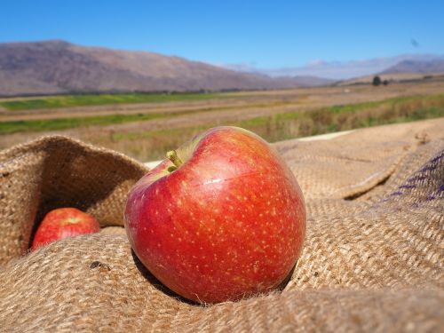 south africa ceres apple