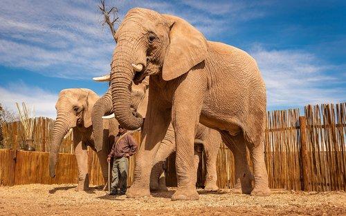 south africa  elephant  africa