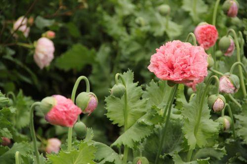 south gland gardens savill garden