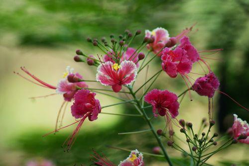 South Goa, Flowers