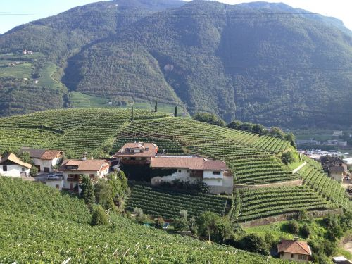 south tyrol vineyards italy