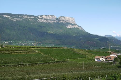south tyrol vineyards mountains