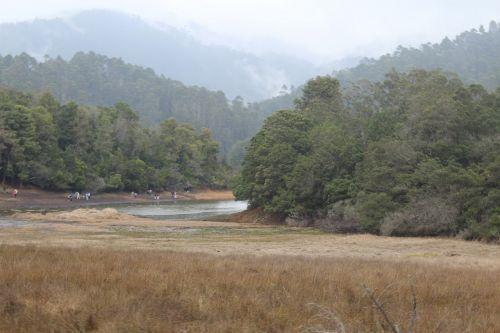 southindia river dense