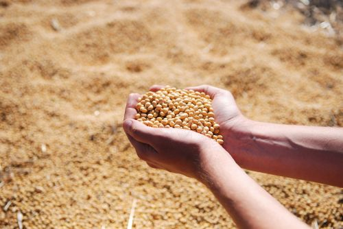 soybean hand agro