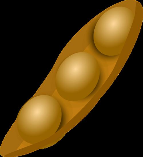 soya soybean vegetable